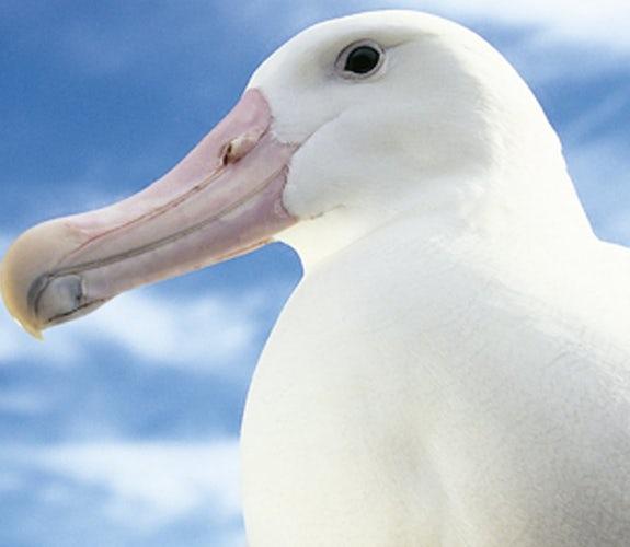 0013 Mooidrukwerk Vogel