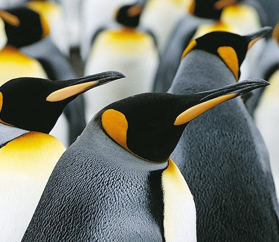 0018 Mooidrukwerk Pinguins