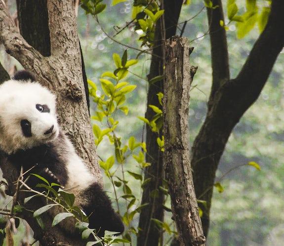 0020 Mooidrukwerk Panda