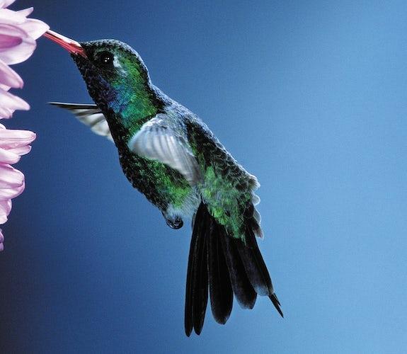 0023 Mooidrukwerk Kolibri